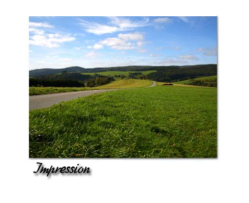 Impression: Wald und Wiesen